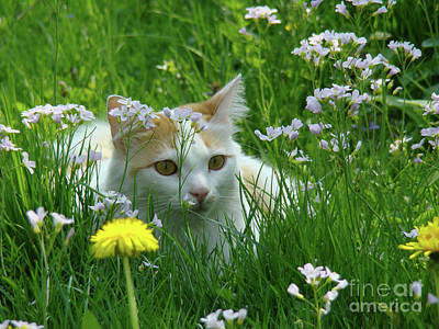 Flower Cat Art Print by Bruno Santoro