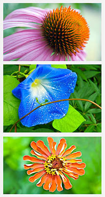 Flower Collage Part Two Art Print by Susan Leggett