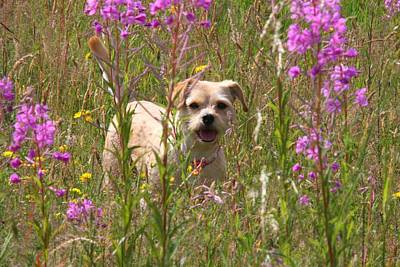 Photograph - Flower Dog by Ed Lukas