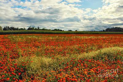 Photograph - Flower Field by Jutta Maria Pusl