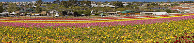 Photograph - Flower Fields At Carlsbad by Mick Anderson