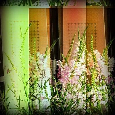 Bouquet Wall Art - Photograph - #flower #flowers # Summer #bouquet by Odarka Shevchenko