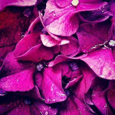 Drops Photograph - #flower #flowers #pink #pretty #nature by Katie Williams