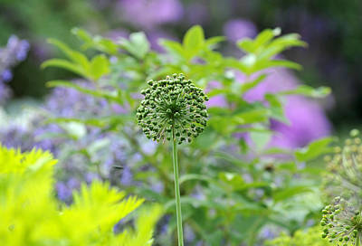 Photograph - Flower Garden by Douglas Pike