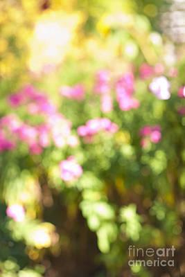Gardening Photograph - Flower Garden In Sunshine by Elena Elisseeva