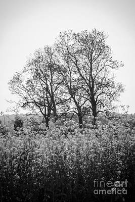 Photograph - Flower Homage To The Trees by Rene Triay Photography