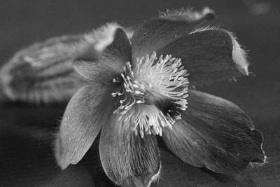 Photograph - Flower In Black And White by Mark J Seefeldt