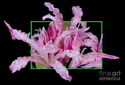 Flower In Frame -13 Art Print