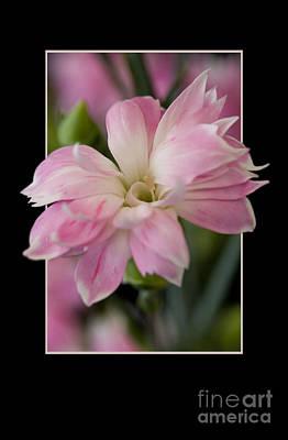Flower In Frame -3 Art Print