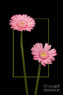 Flower In Frame -7 Art Print
