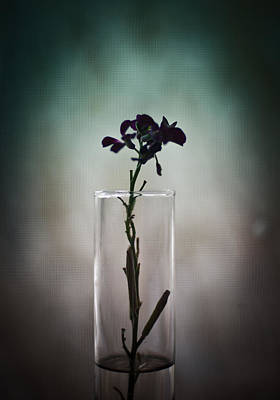 Photograph - Flower In Vase by Scott Sawyer
