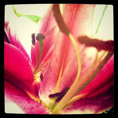 Lilies Wall Art - Photograph - #flower #instanature #iphoneography by Angeline Mae