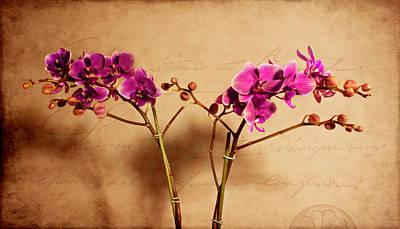 Photograph - Flower Letter by Milena Ilieva