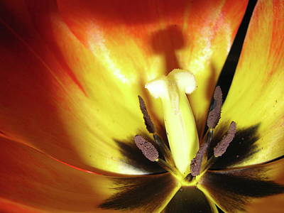 Flower Life Art Print by Mike Stouffer