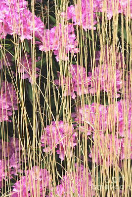 Photograph - Flower Loom by Frank Townsley