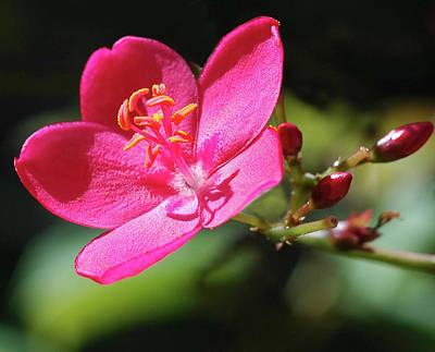 Photograph - Flower Macro by Dan McManus