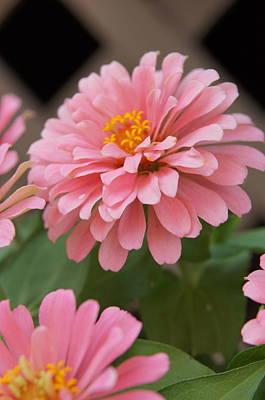 Photograph - Flower by Megan Cohen