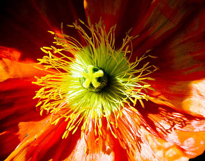 Photograph - Flower by Mickey Clausen