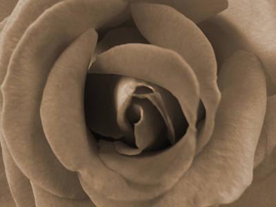 Rose Photograph - Flower Of Love by Leana De Villiers