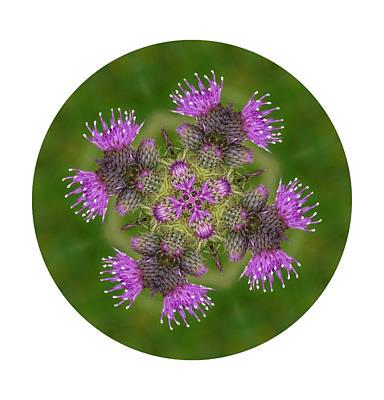 Art Print featuring the photograph Flower Of Scotland by Lynn Bolt