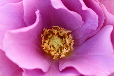 Photograph - Flower Power by Diana Haronis