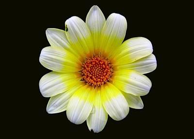 Photograph - Flower by Scott Brown