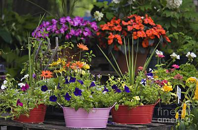 Photograph - Flower Shop 1 - D008011 by Daniel Dempster