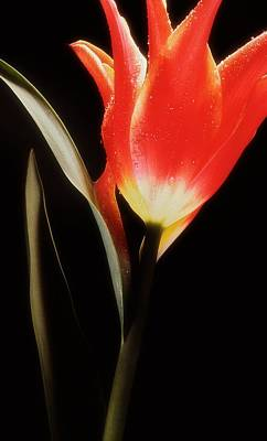 Photograph - Flower Still 1 by Thomas Born