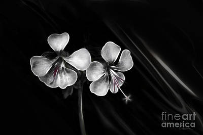 Photograph - Flower Twins by Danuta Bennett