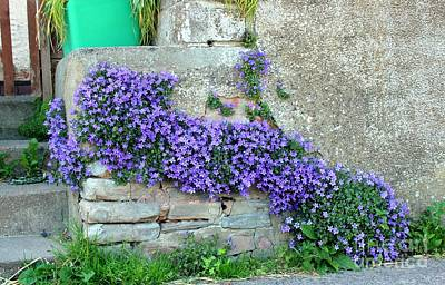 Flowered Steps Art Print by Rene Triay Photography