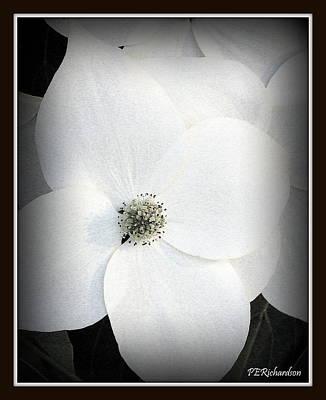 Photograph - Floweret by Priscilla Richardson
