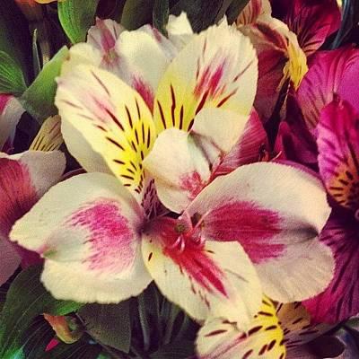 Bouquet Wall Art - Photograph - Flowerful by Susan McGurl