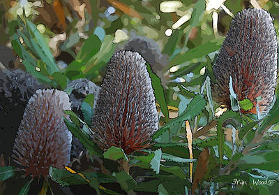 Digital Art - Flowering Banksia by Fran Woods