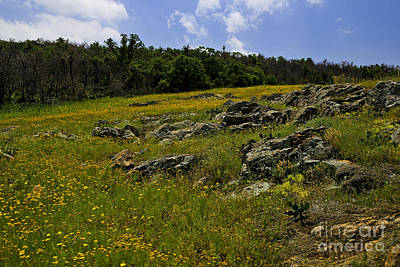 Photograph - Flowering Hill by Royce  Gideon