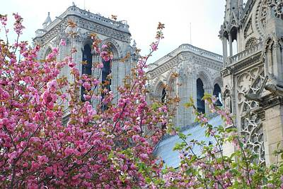 Flowering Notre Dame Print by Jennifer Ancker