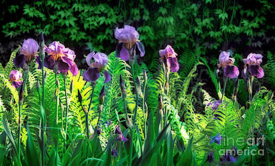Photograph - Flowering Purple Irises - Fine Art Photography by Renata Ratajczyk