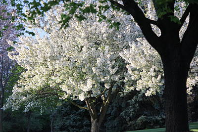 Flowering Springtime Tree Art Print by James Hammen