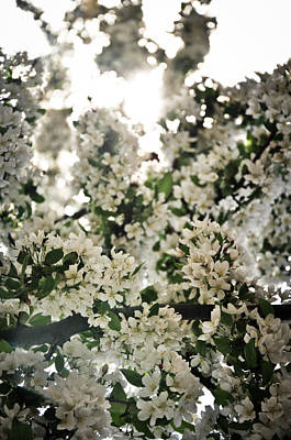 Photograph - Flowering Trees by Scott Sawyer