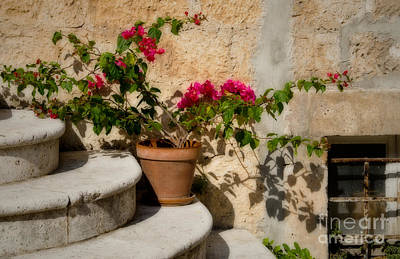 Flowerpot On Stairs In Kocura Croatia Art Print