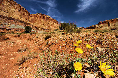 Photograph - Flowers And Canyons by Adam Jewell