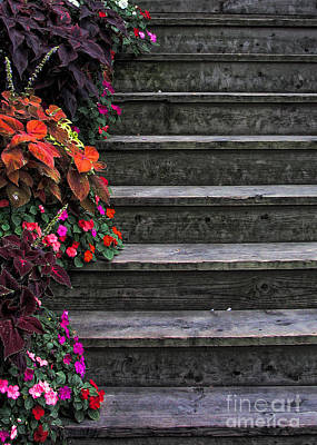 Photograph - Flowers And Steps by Joanne Coyle