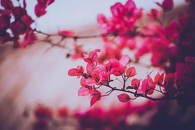 Y120817 Photograph - Flowers Blossom by Yiu Yu Hoi
