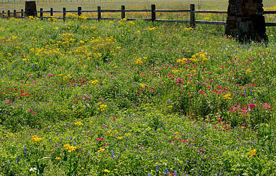 Landscapes Royalty-Free and Rights-Managed Images - Naturally Texas in Spring by Connie Fox