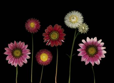 Computer Generated Flower Photograph - Flowers by Deddeda