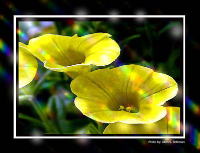 Photograph - Flowers From The Backyard by Allan Rothman