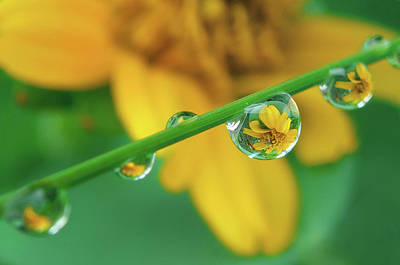 Flowers In Water Droplets Art Print by Thank you.