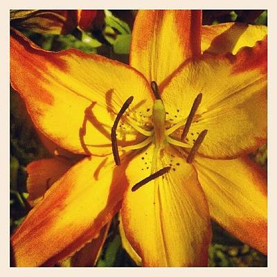 Lilies Wall Art - Photograph - #flowers #northdakota #lily #orange by Emily Nielsen