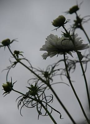 Photograph - Flowers On A Cloudy Day by Rebecca Powers