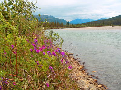 Photograph - Flowers On The Koyukuk by Adam Owen