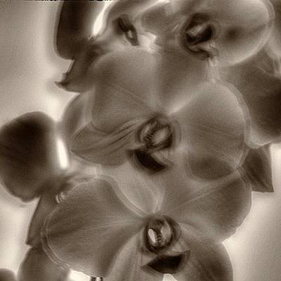 Orchids Photograph - #flowers #orchid #orchids by Omar Colon